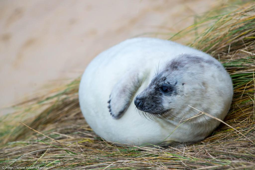 2013.12.24 - Seals - 67