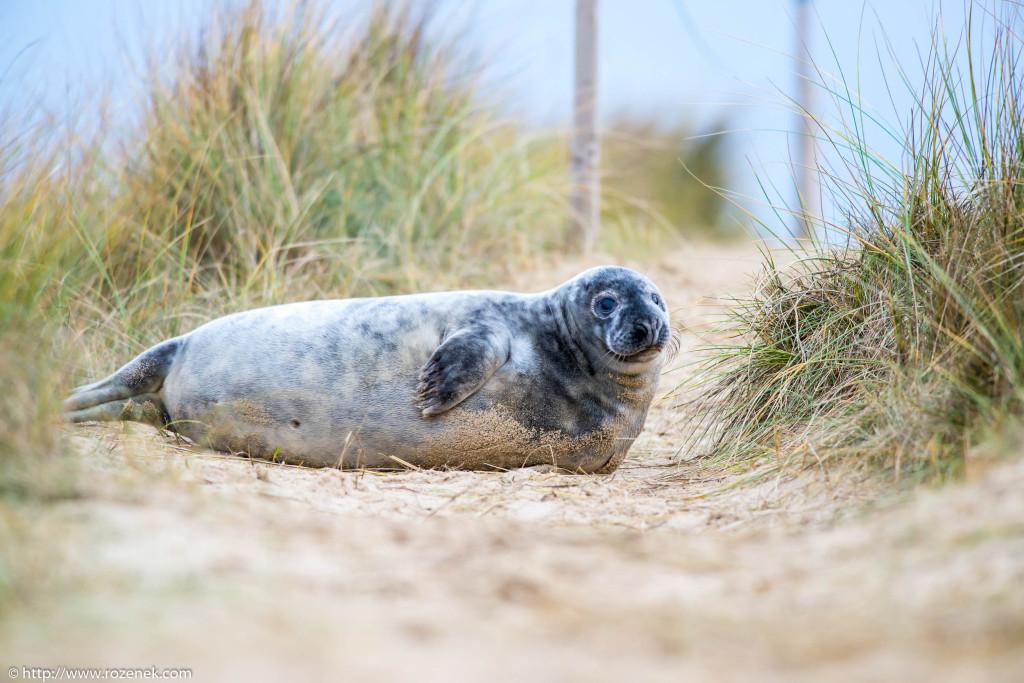 2013.12.24 - Seals - 68