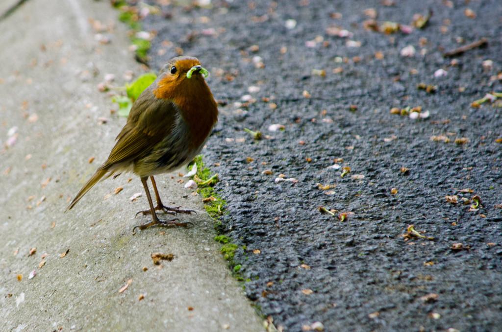 2012.06.04 - Marriotts Way Birds - 01