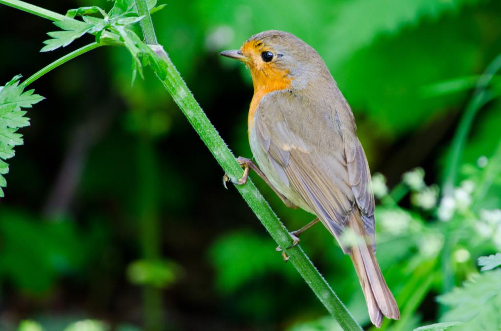 2012.06.04 - Marriotts Way Birds - 08