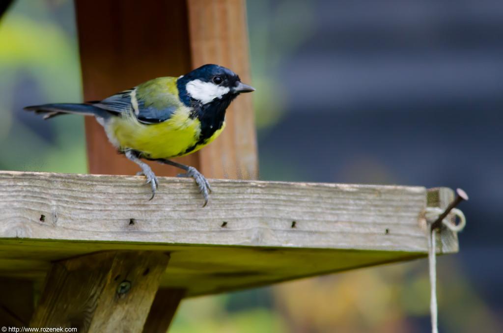 2012.08.24 - Hickling Broad Reserve - 10
