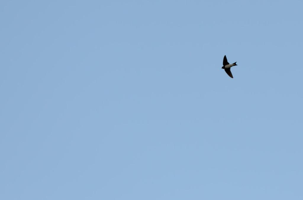 2012.08.26 - Strumpshaw Fen - 03