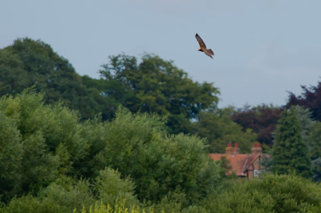 2012.08.26 - Strumpshaw Fen - 10