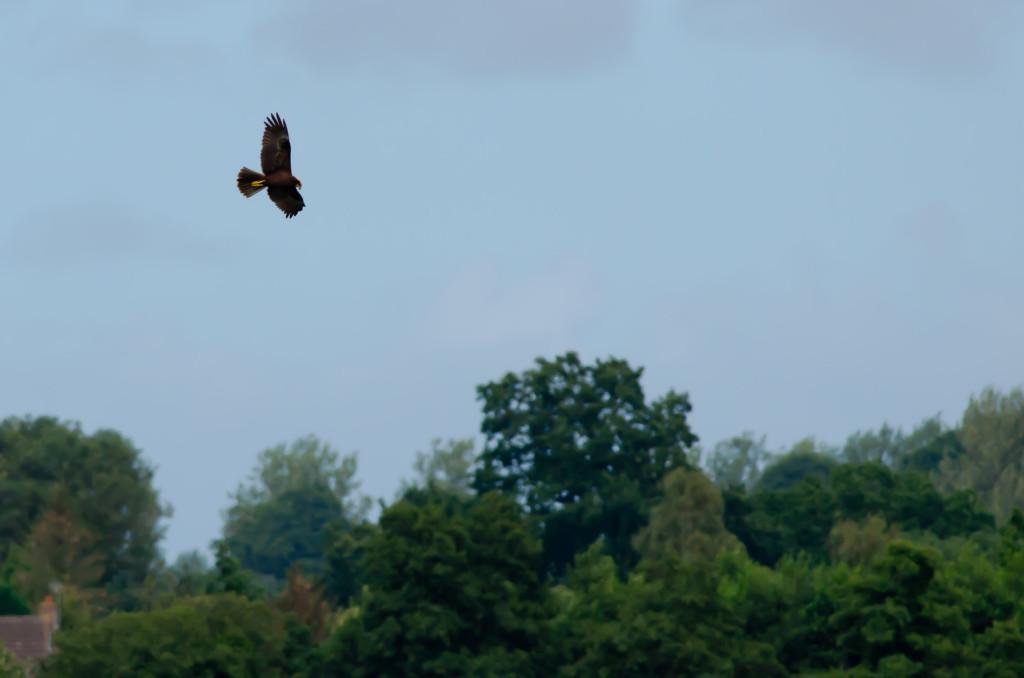 2012.08.26 - Strumpshaw Fen - 11