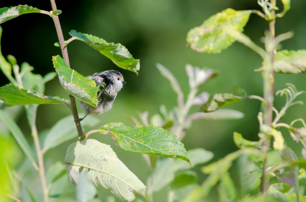 2012.08.26 - Strumpshaw Fen - 17