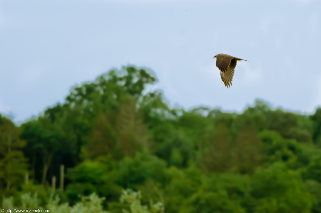 2012.08.31 - Strumpshaw Fen - 06
