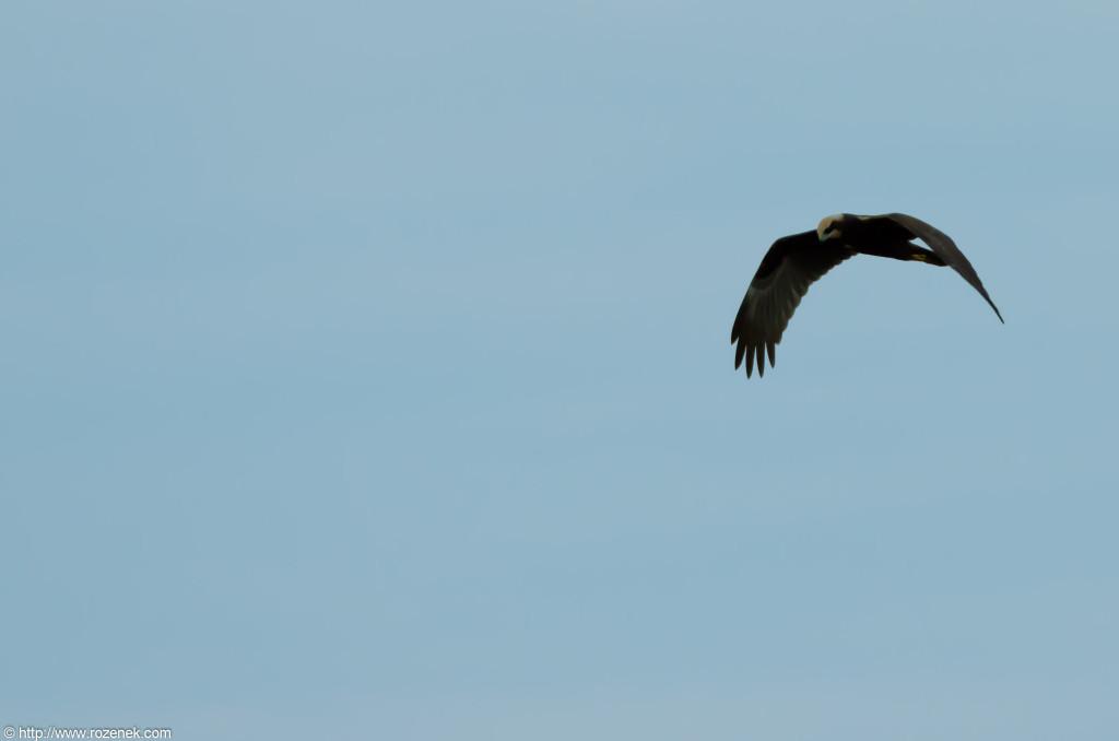 2012.08.31 - Strumpshaw Fen - 25