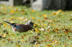 2012.10.13 - Catholic Catherdal and Cemetery - 11