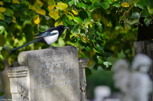 2012.10.13 - Catholic Catherdal and Cemetery - 14