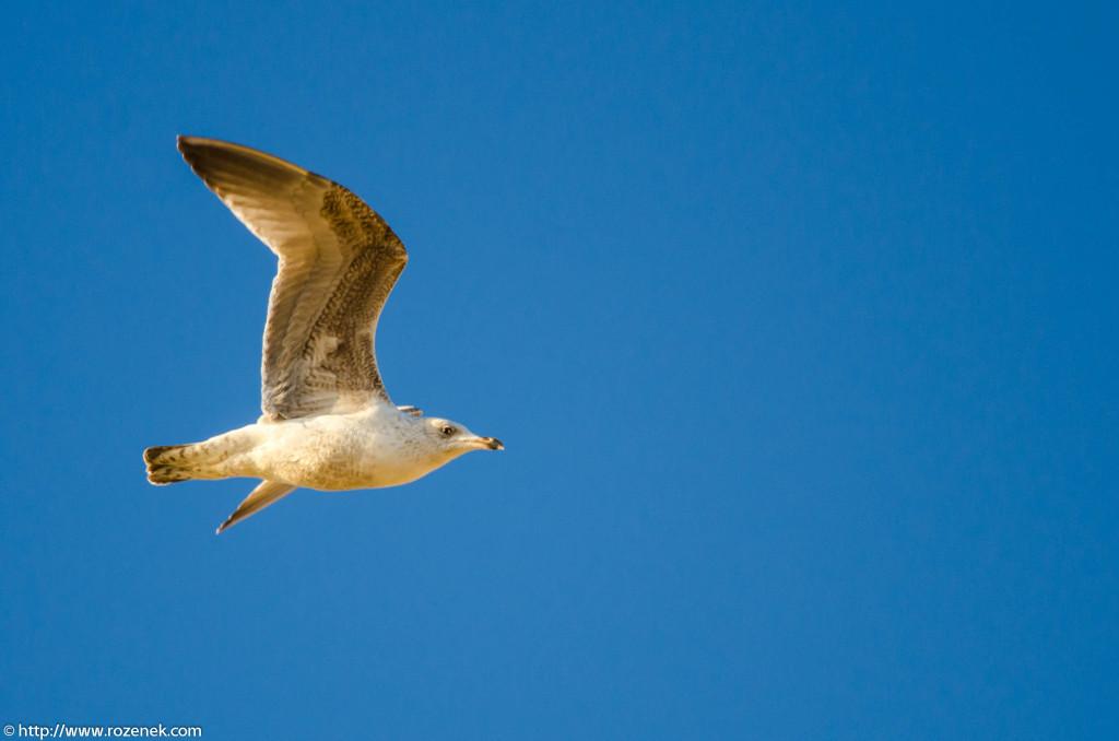 2013.04.20 - Birds in Cromer - 05