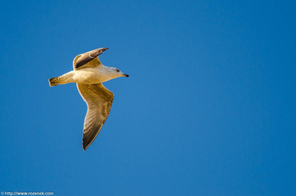 2013.04.20 - Birds in Cromer - 06