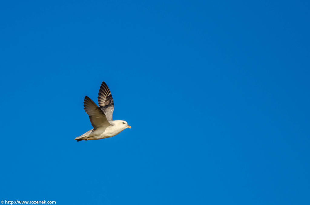 2013.04.20 - Birds in Cromer - 09