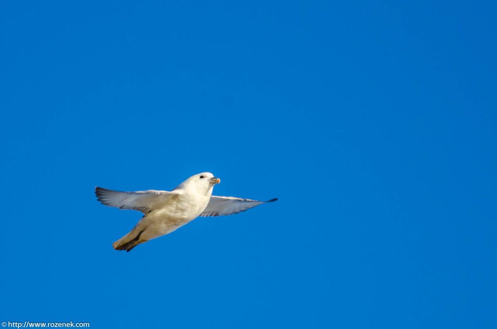 2013.04.20 - Birds in Cromer - 10