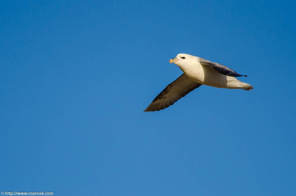 2013.04.20 - Birds in Cromer - 16