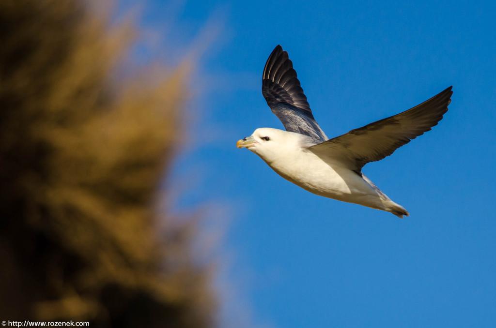 2013.04.20 - Birds in Cromer - 17