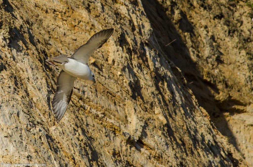 2013.04.20 - Birds in Cromer - 18