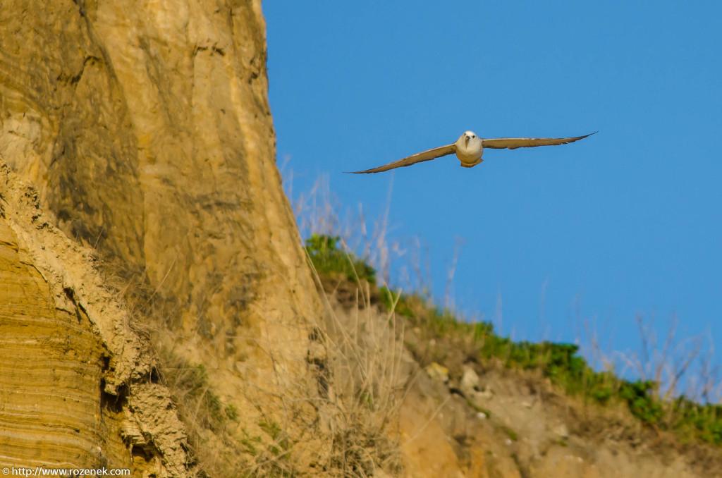 2013.04.20 - Birds in Cromer - 19