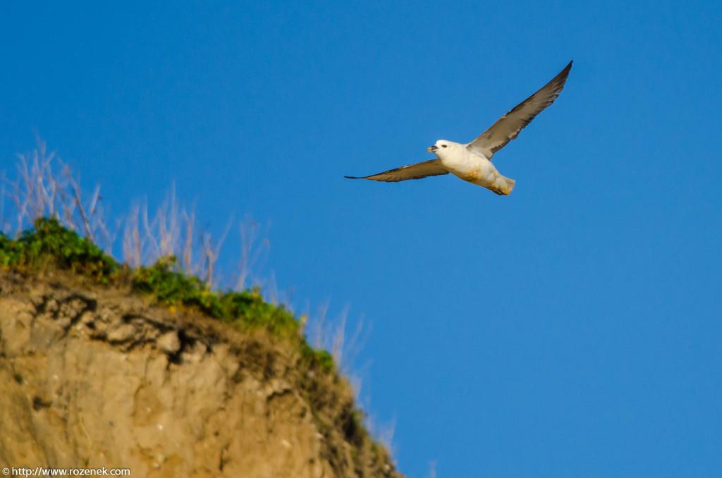 2013.04.20 - Birds in Cromer - 20