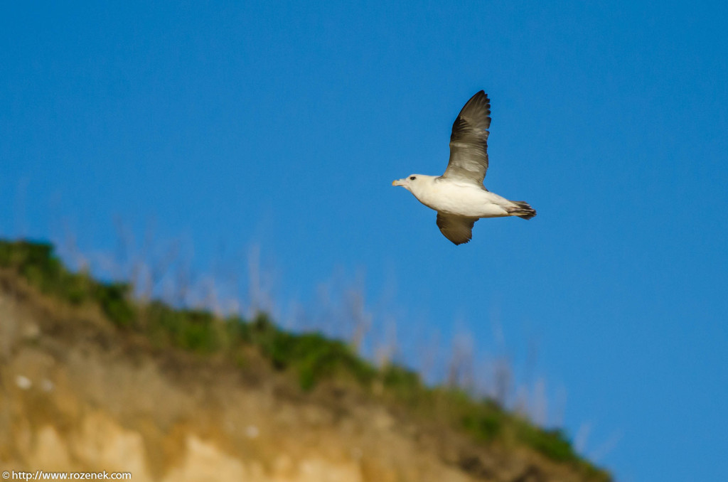 2013.04.20 - Birds in Cromer - 23