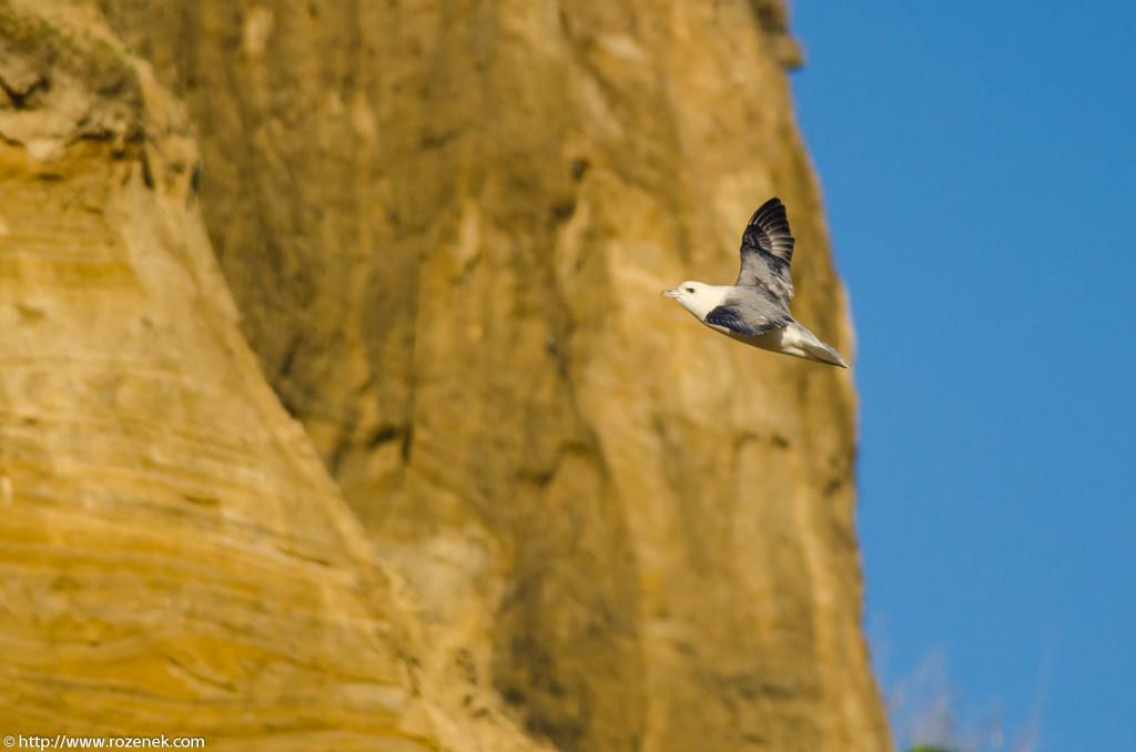 2013.04.20 - Birds in Cromer - 24