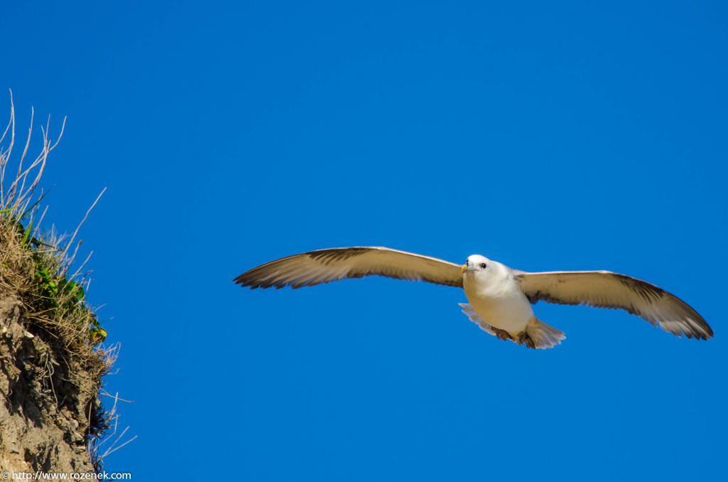 2013.04.20 - Birds in Cromer - 26