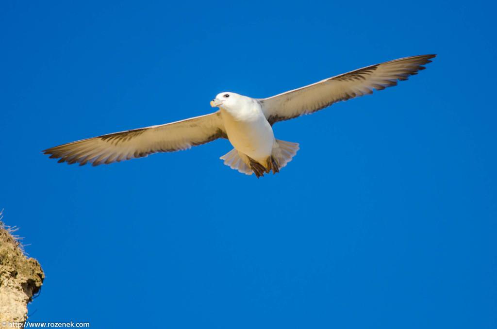 2013.04.20 - Birds in Cromer - 27