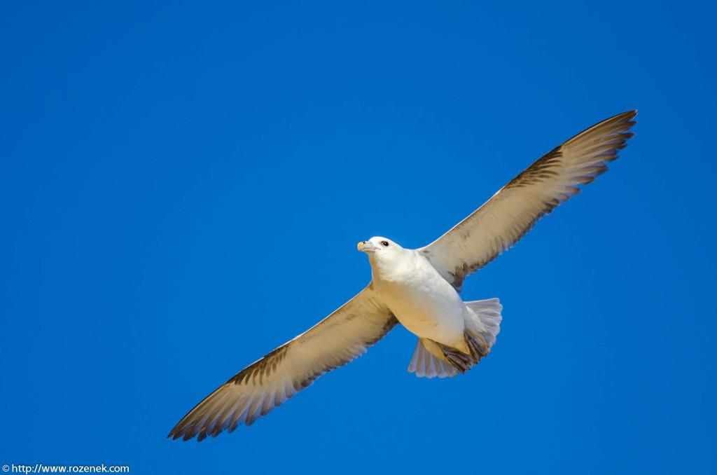 2013.04.20 - Birds in Cromer - 28