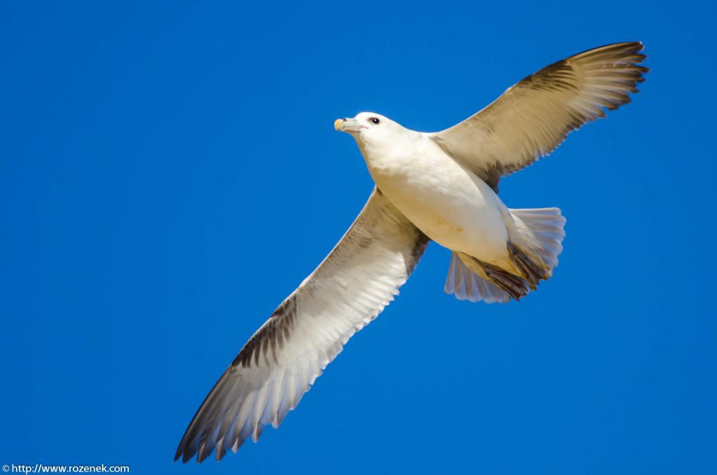 2013.04.20 - Birds in Cromer - 29