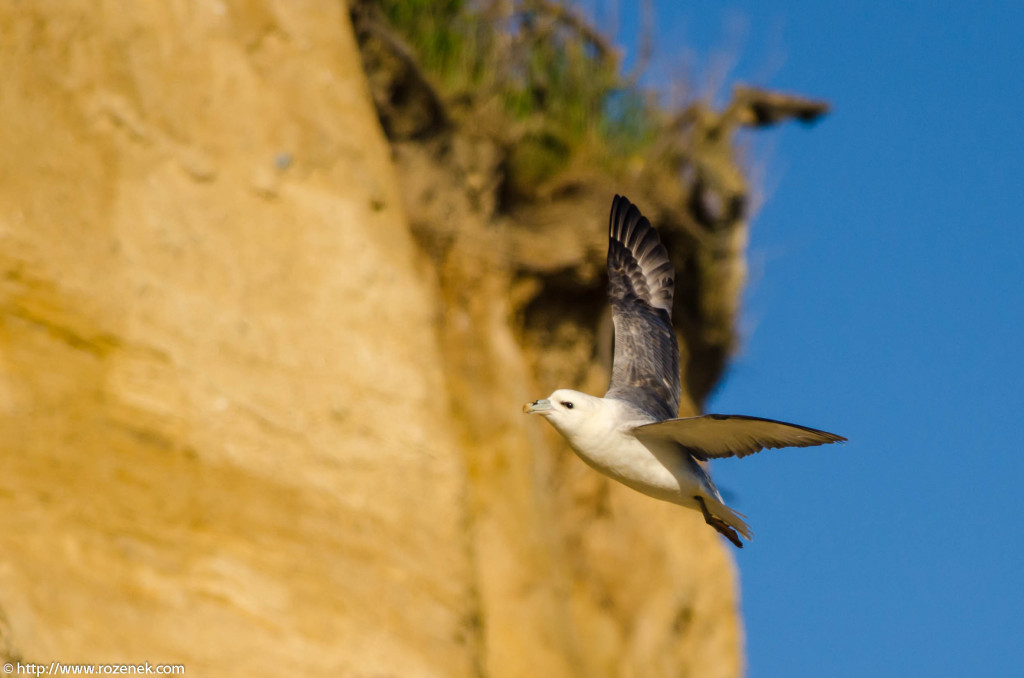 2013.04.20 - Birds in Cromer - 30