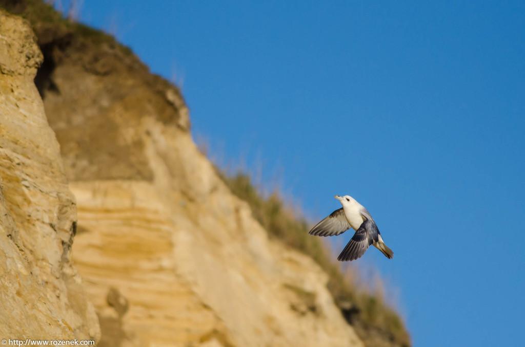 2013.04.20 - Birds in Cromer - 33