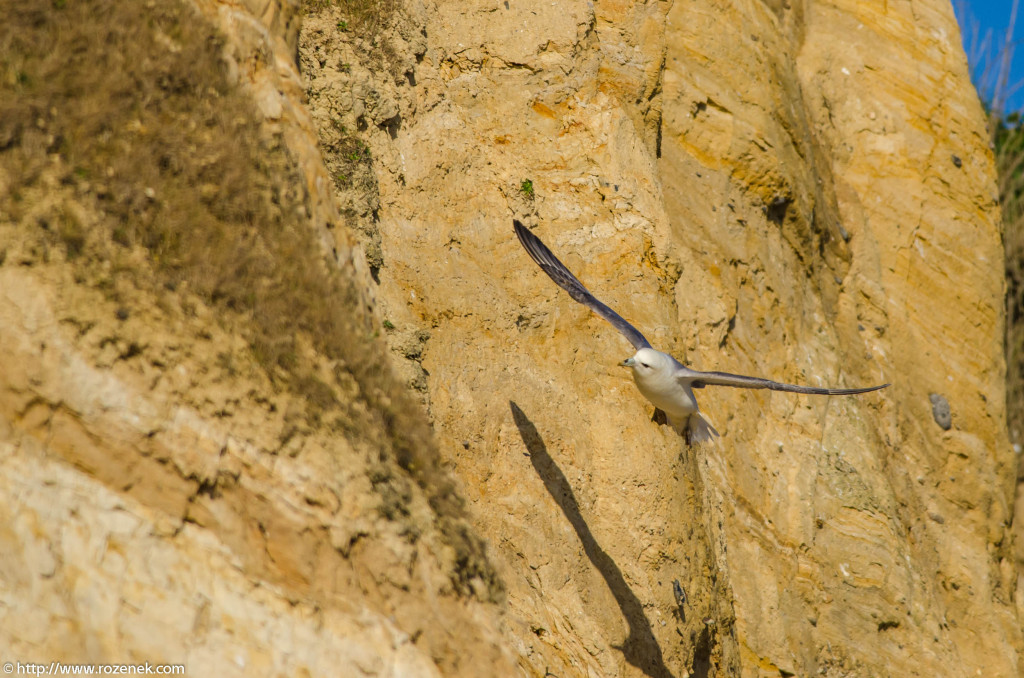 2013.04.20 - Birds in Cromer - 34