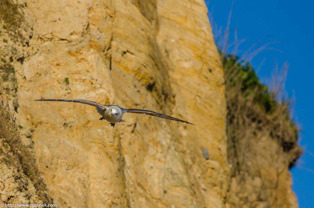 2013.04.20 - Birds in Cromer - 35