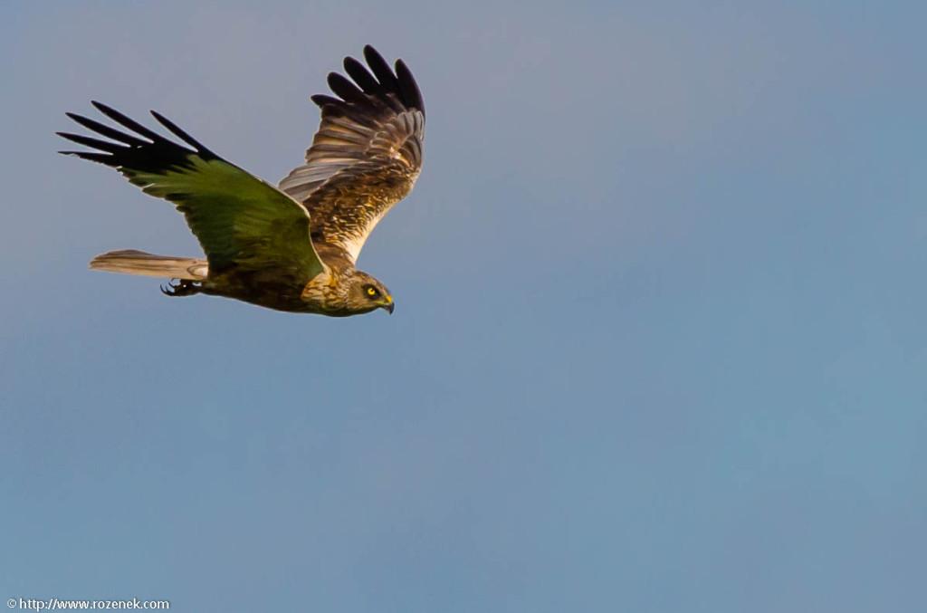 2013.06.16 - Bird Photography - 01