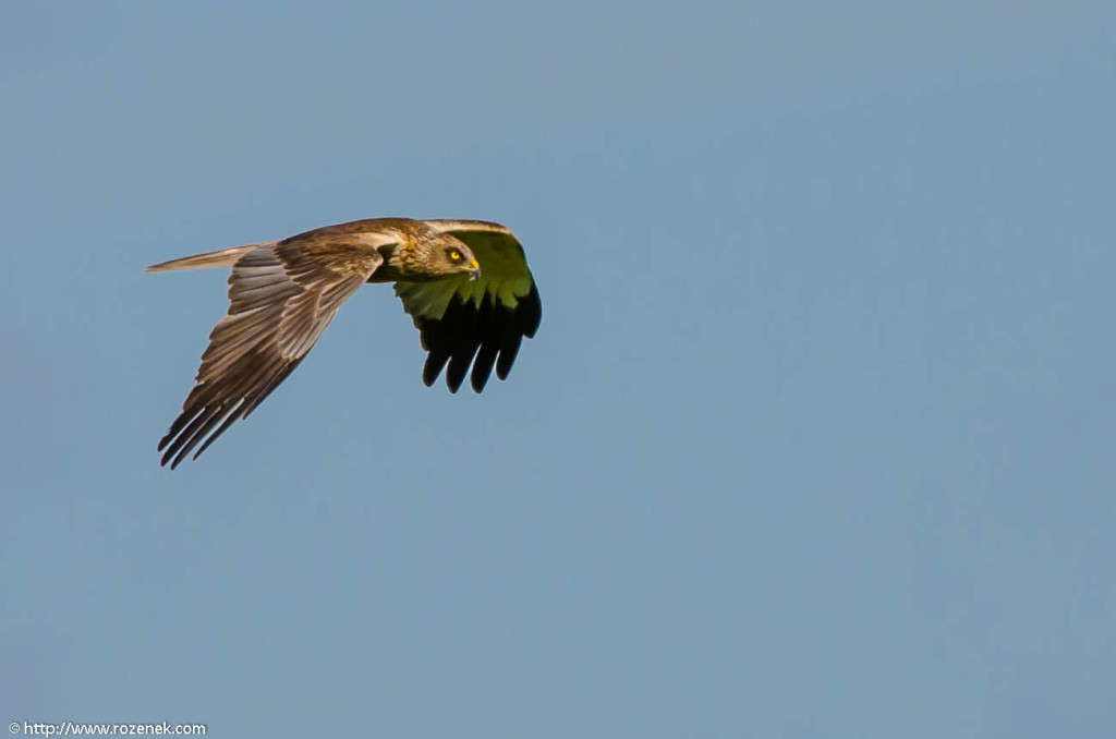 2013.06.16 - Bird Photography - 02