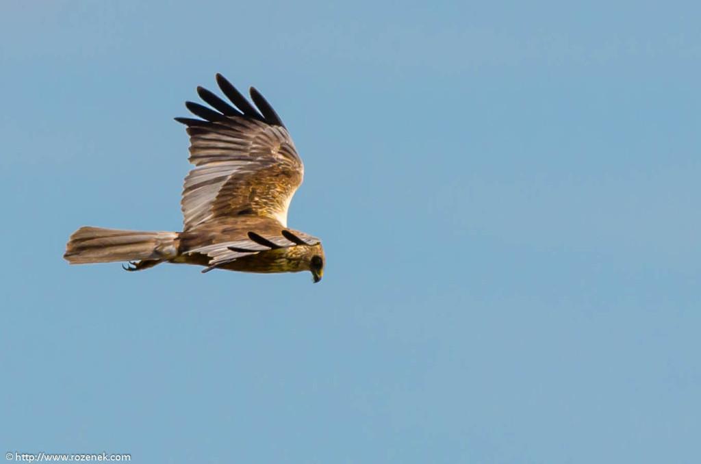 2013.06.16 - Bird Photography - 04