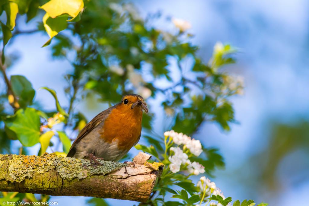 2914.04.27 - Robin - 08