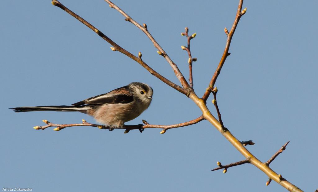 Birds-11.03.14-10