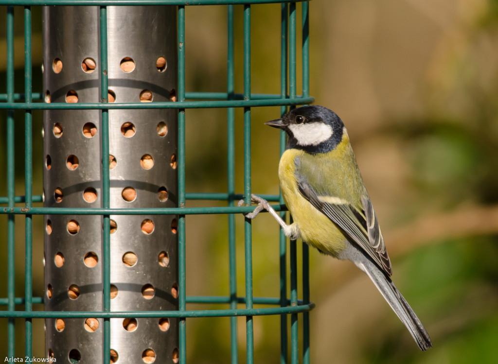 Birds-12.03.14-13