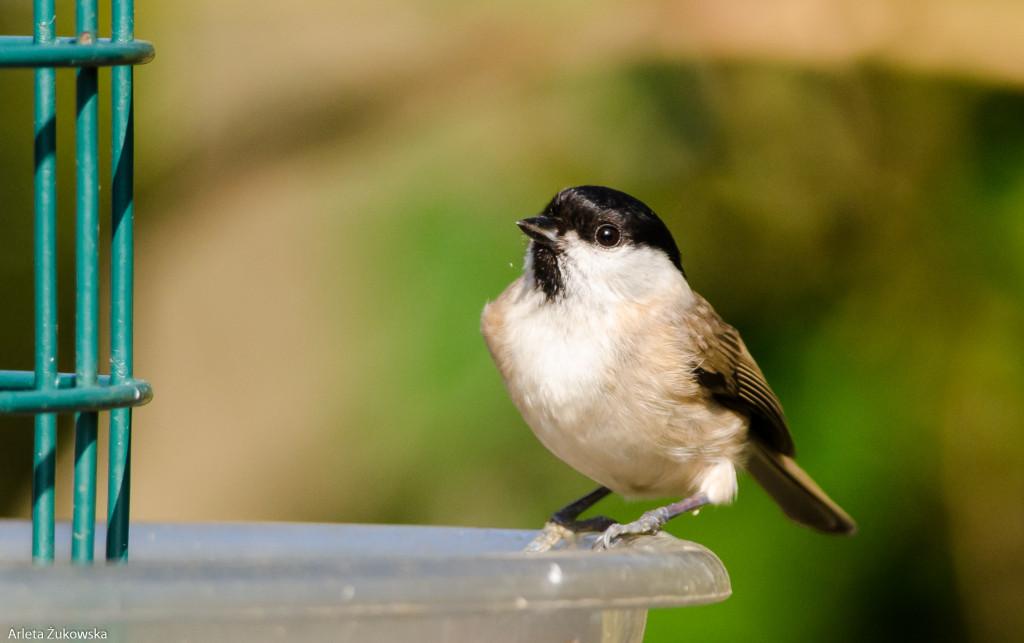 Birds-12.03.14-15