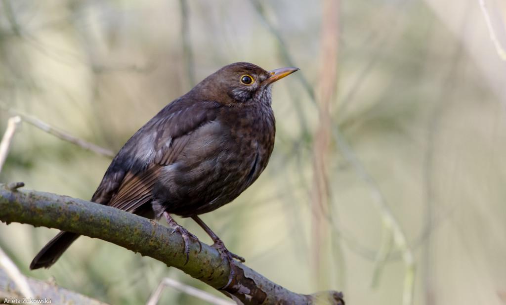 Birds-12.03.14-9