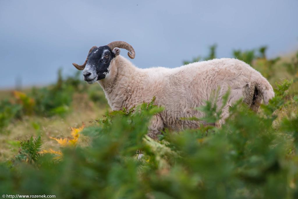 2013.08.27 - Pentland Hills - 106
