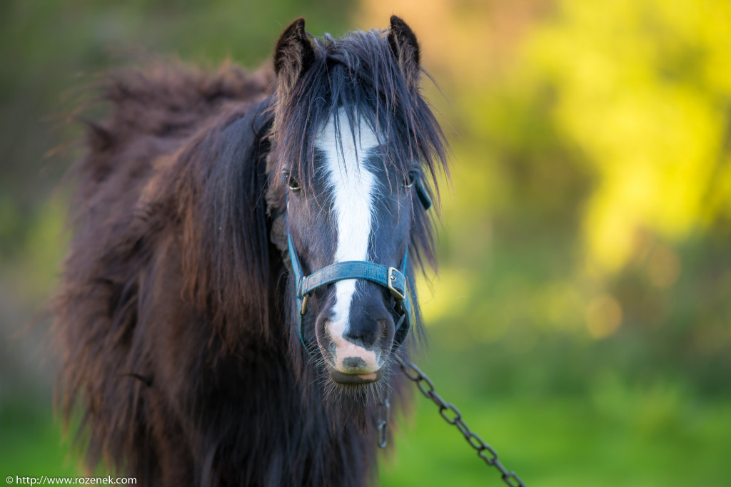 2014.04.14 - Horses - 01