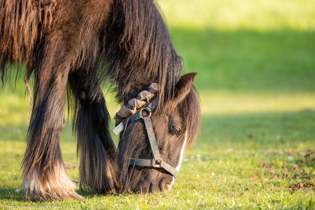 2014.04.14 - Horses - 06