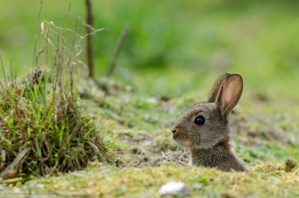 2914.04.27 - Rabbits - 03