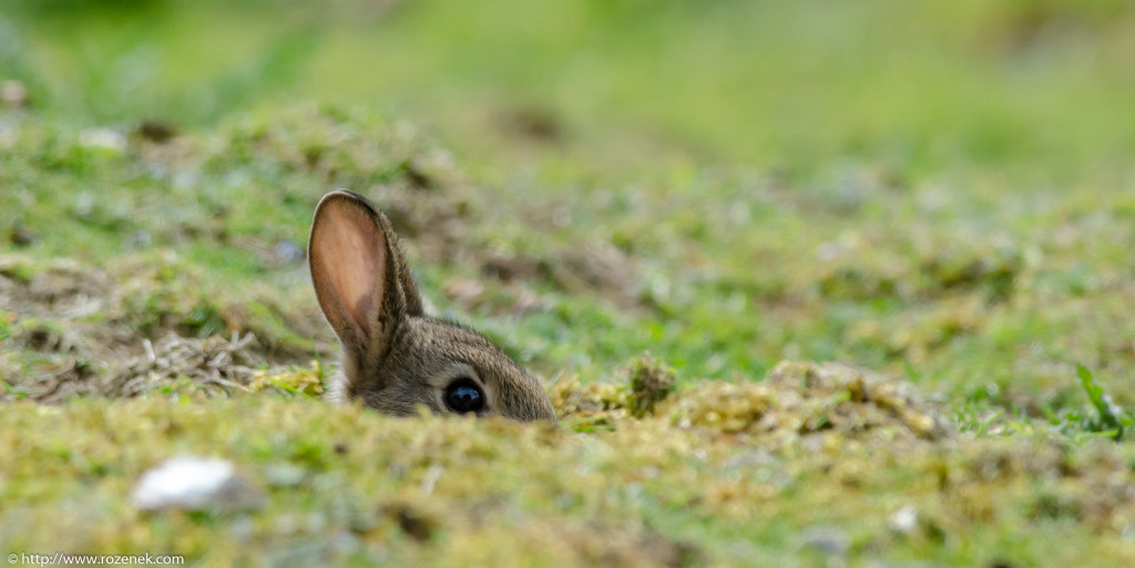 2914.04.27 - Rabbits - 04