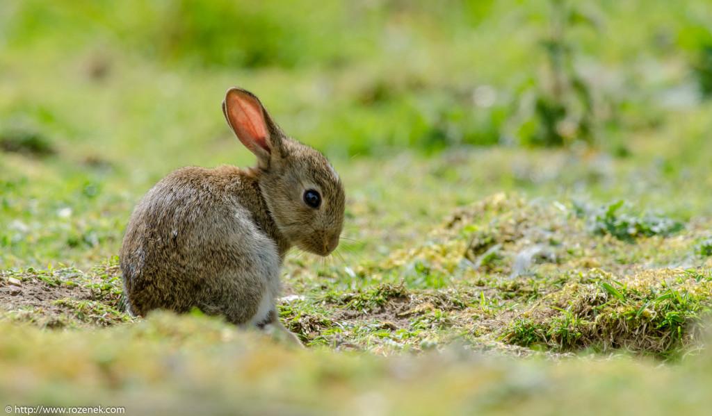 2914.04.27 - Rabbits - 05