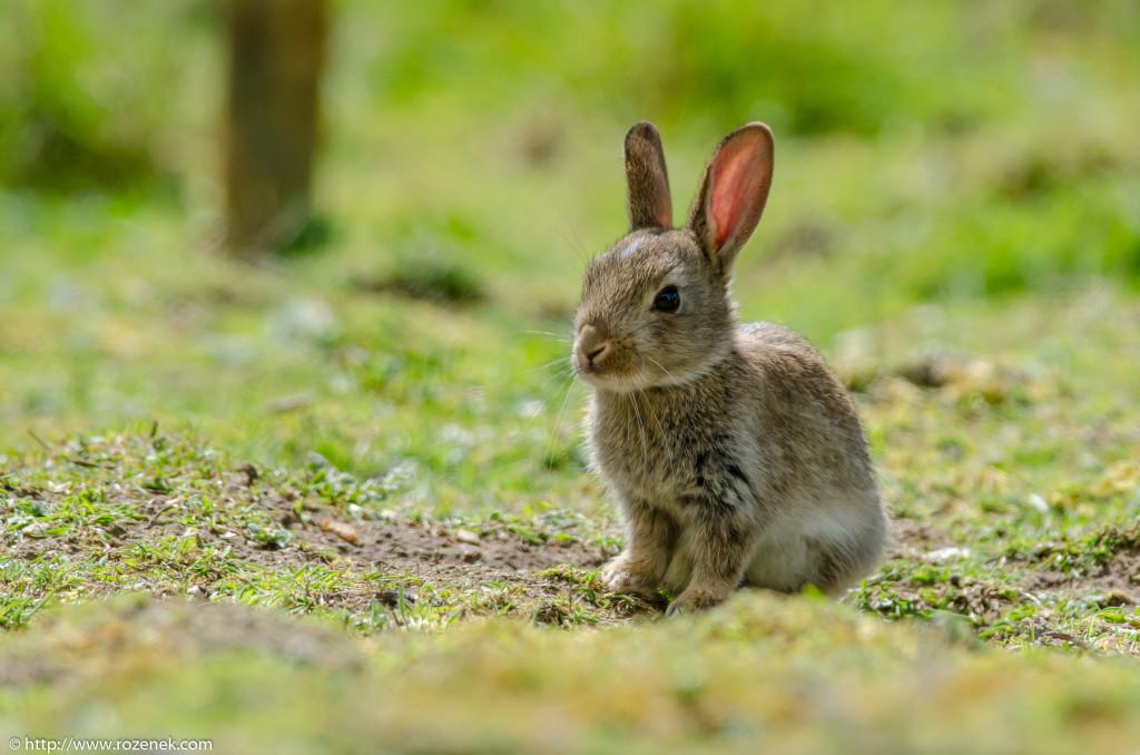2914.04.27 - Rabbits - 07