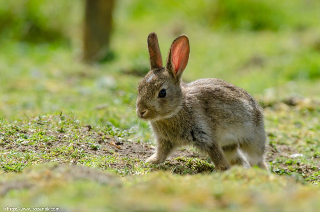 2914.04.27 - Rabbits - 08