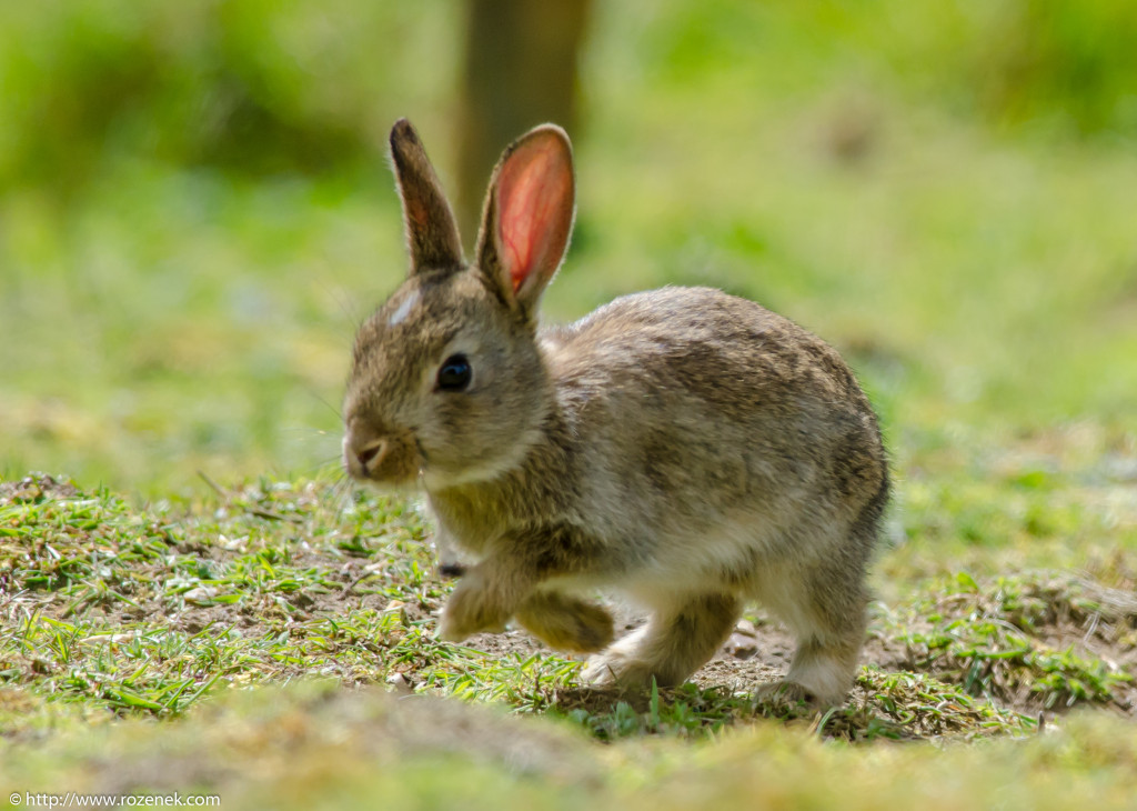 2914.04.27 - Rabbits - 09