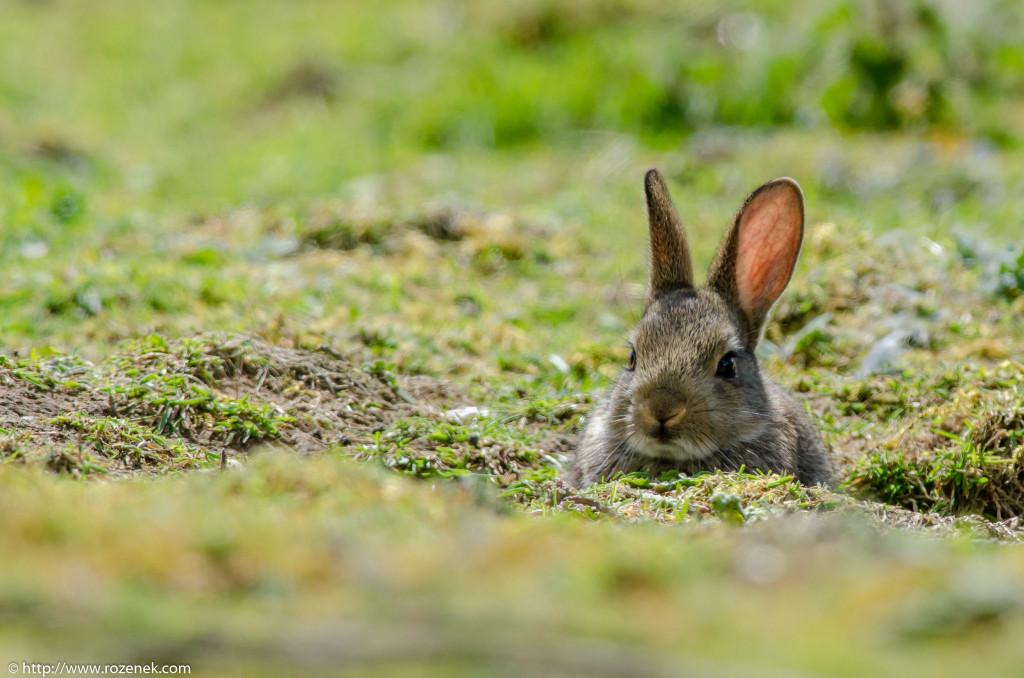 2914.04.27 - Rabbits - 10